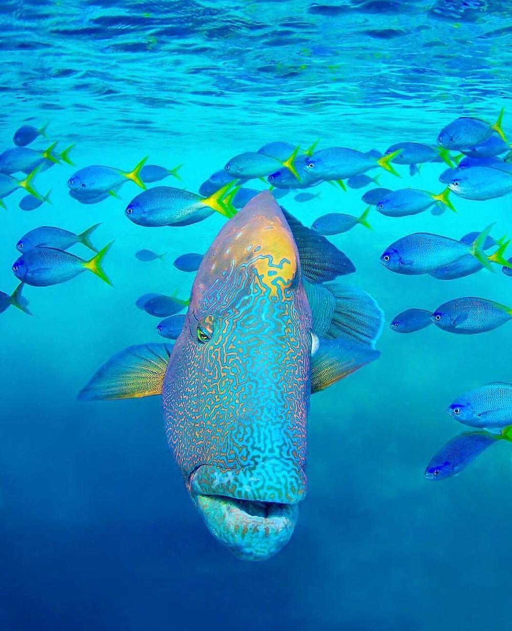 Whitsundays marine life