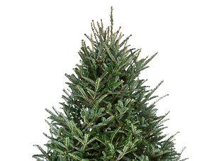 atlanta chrismas tree delivery