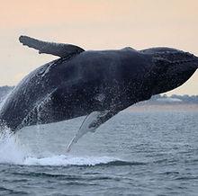 virginia-beach-whale-940x532.jpg