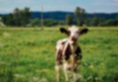 nature-grass-field-farm-meadow-prairie-8