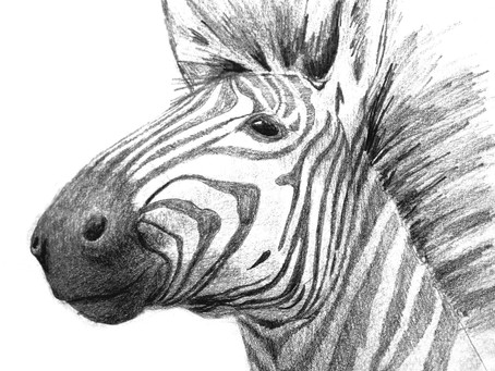 Drawing a Zebra