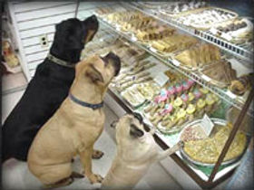 bakery-dogs.jpg