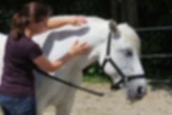 Pferd Massage Hals