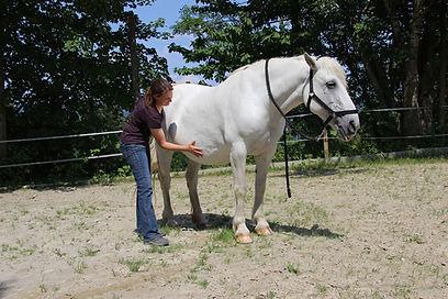 Pferd Faszientherapie