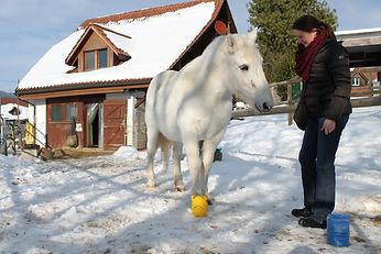 Pferd Clickertraining Farbunterscheindung