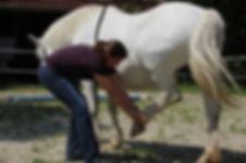 Pferd Hinterhand Dehnung