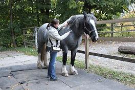 Pferd Matrix-Rhythmus Therapie