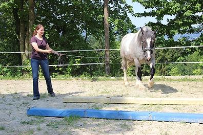 Pferd Longieren