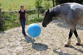 Ball Clickertraining Pferd