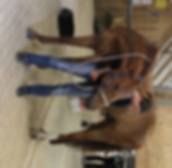 Pferde-Pilates Dehnung Hals