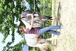 Pferd Führen in Stellung
