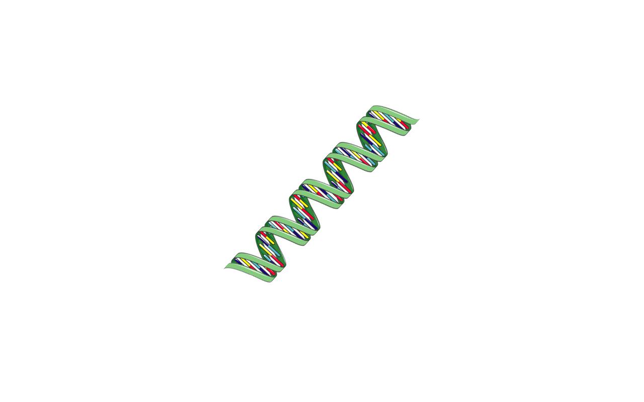 2) Genes