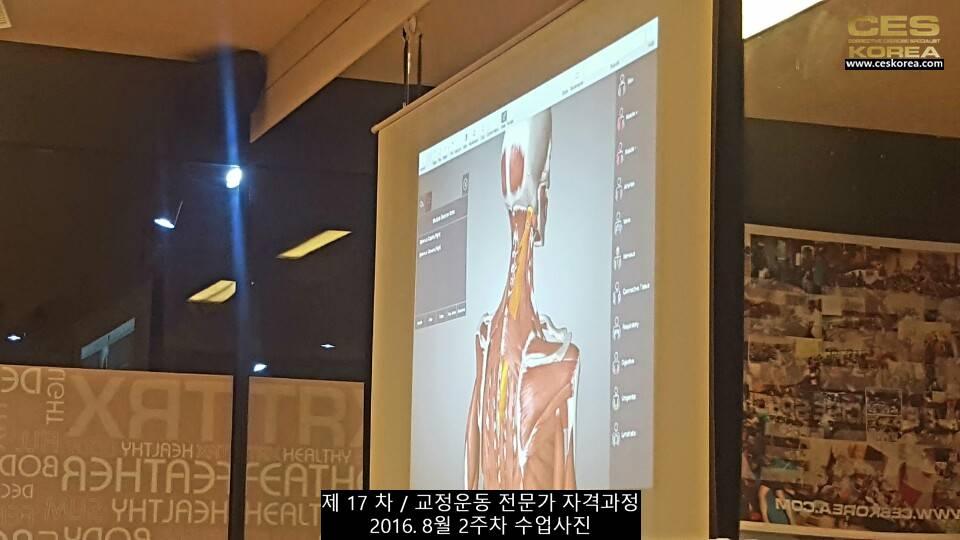 17차 ces korea 교정운동 전문가 과정 2주차 (16)