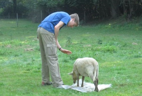 Henry Taming a Sheep