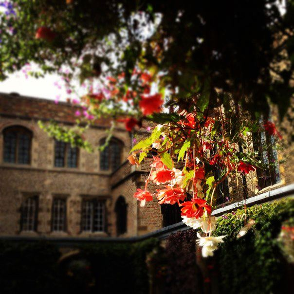 Flowers in Cloister Court