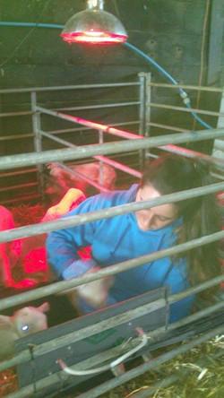 Facebook - Another Emily training a lamb.jpg.jpg.jpg