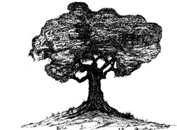 top paddock tree copy_med res