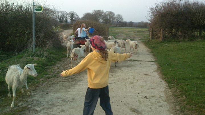 Facebook - Milking ewes moving field, with the kids and Emily.jpg