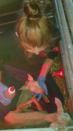 Facebook - Rosie bottle feeding a lamb