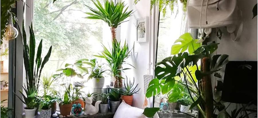 TRÊS dicas para decorar a sua casa com plantas