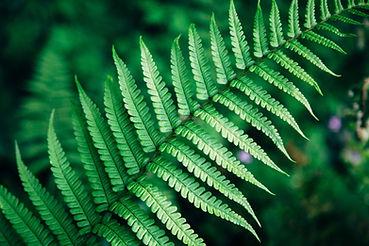 feuille de fougère verte en gros plan