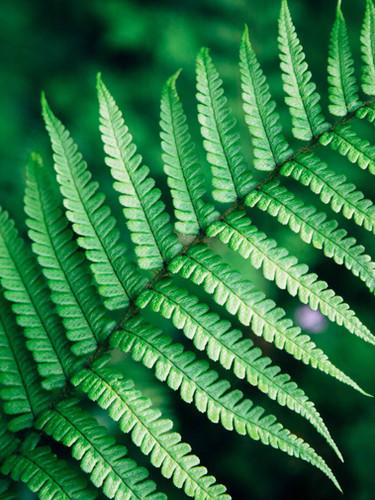 Flora Surveys
