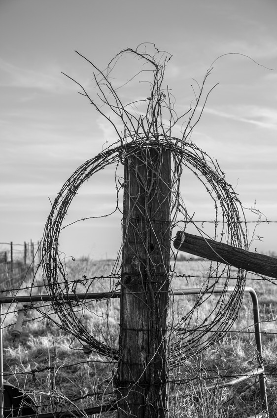 Fence Post & Barbed Wire