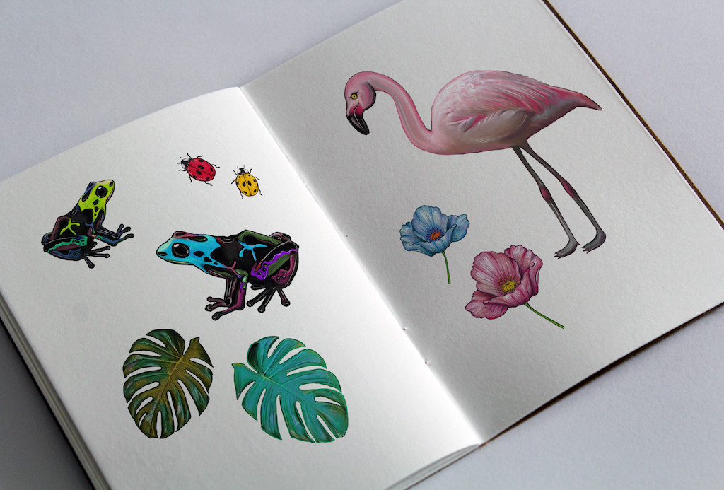 Flamingo, flowers and frogs in sketchbook