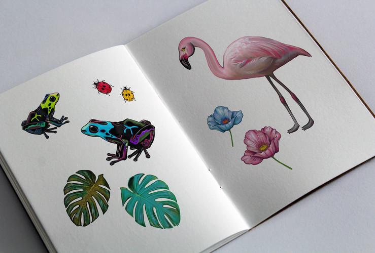 Flamingo, flowers and frogs in sketchbook