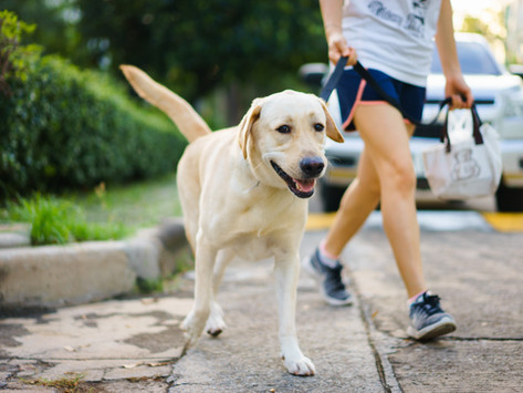 Pięć sposobów na fajny spacer z psem