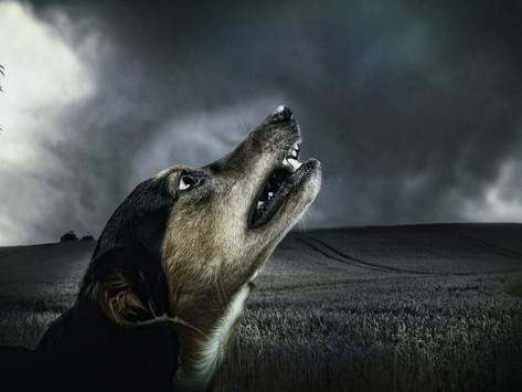 Pies w czasie burzy
