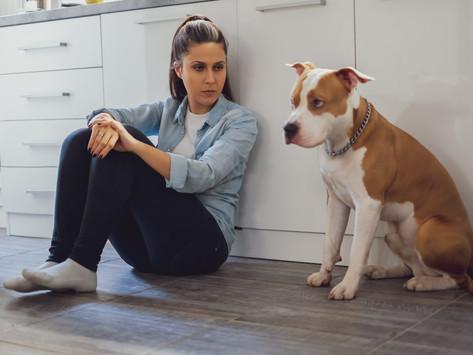 Pies stresuje się, kiedy się złościsz