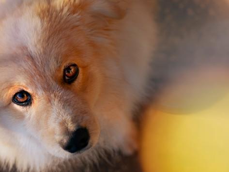 Psy nas obserwują