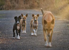 Kastracja psa to odpowiedzialny wybór? To nie takie proste.