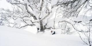 fraser-tree-Mobile