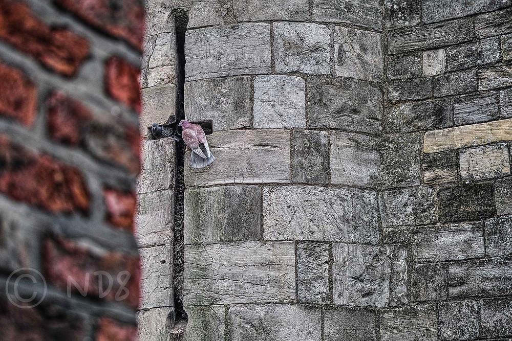 Repurposed, York | Sigma DP3 Merrrill | www.richardjwalls.