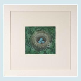 Dunock's Nest