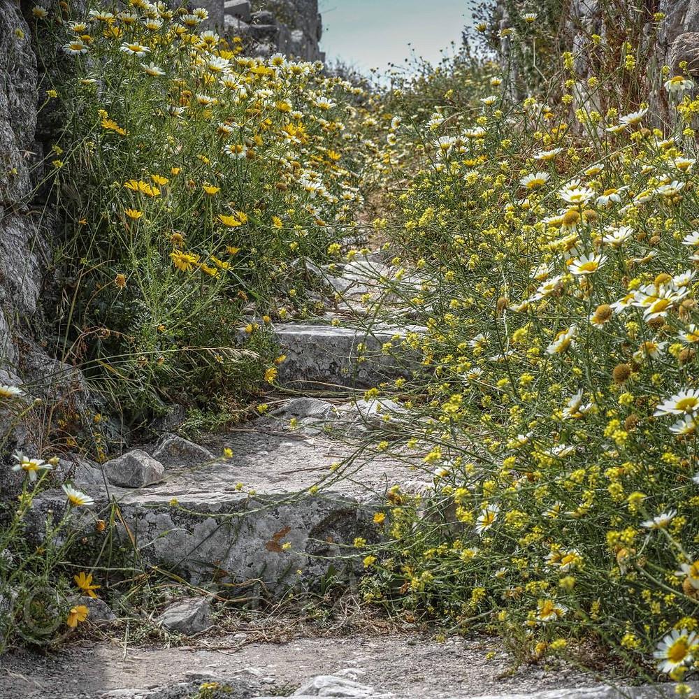 Ancient Paths, Thera, Santorini   Sigma Merrill DP3   www.richardjwalls.com