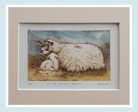 White Lamb & Ewe