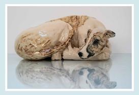 Curled Hound