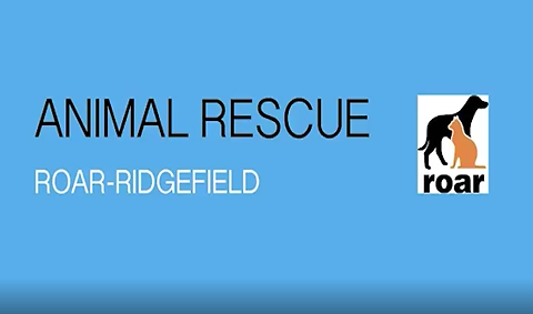 Animal Rescue ROAR-Ridgefield VOD Graphi