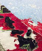 Blood Danube.jpg