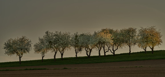 Apfel 4.jpg