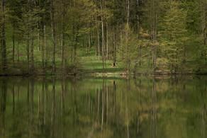 Teichlandschaft_Lamperstätten / Steiermark L 9