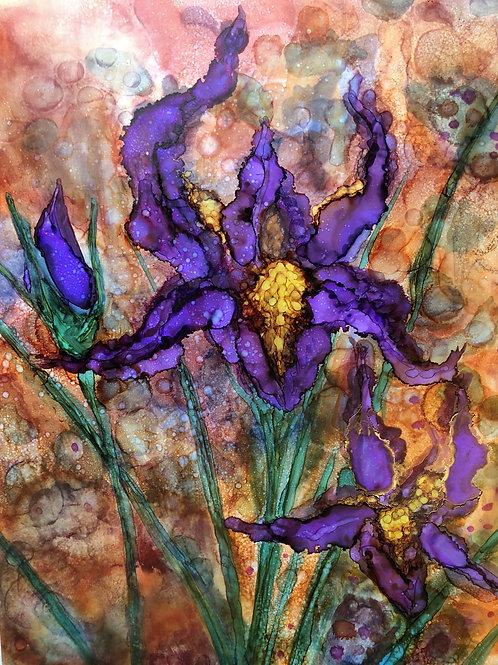 Purple Irises : Prints