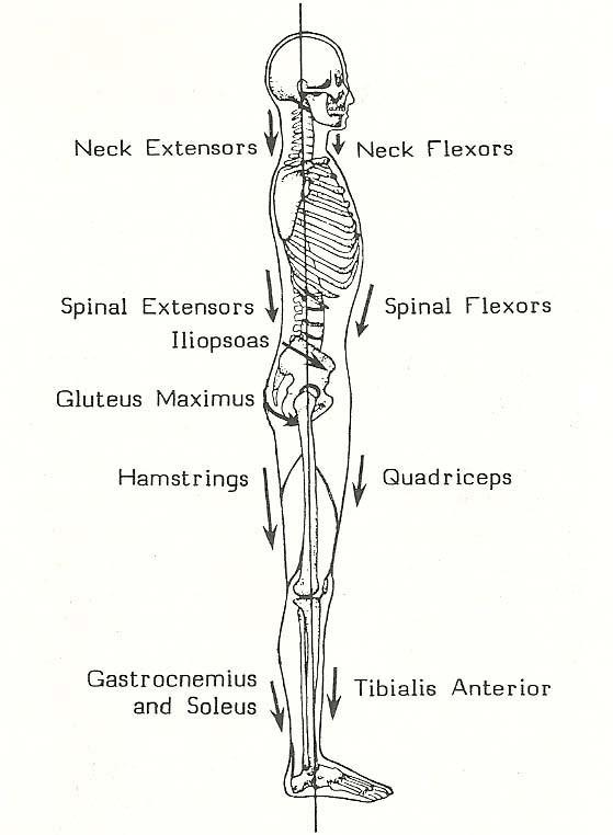 Body_Alignment_Figure1.jpg