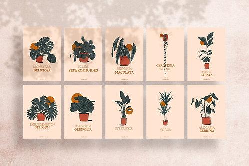 Pack Illustrations de plantes