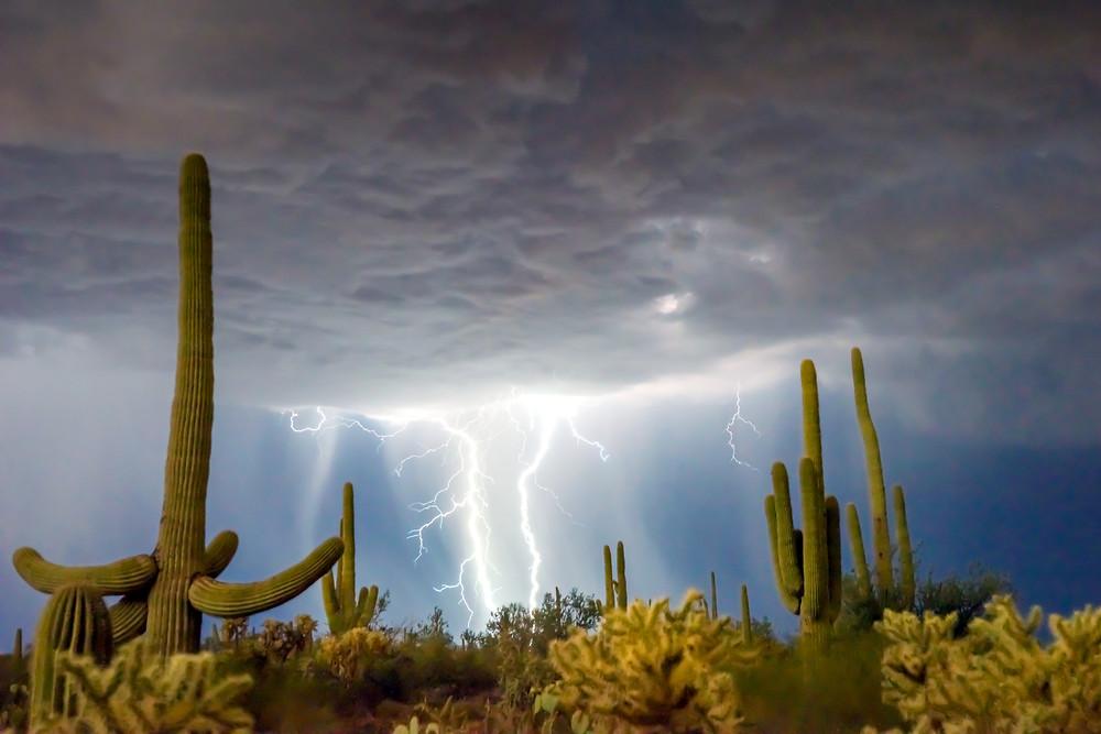 Lighting over saguaro