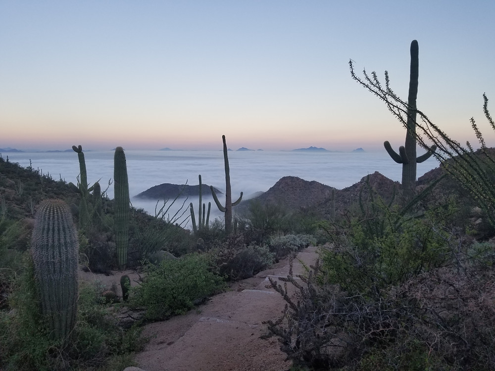 My pic of a rare fog lake in our Sonoran Desert's Avra Valley from Saguaro National Park with peaks of Ironwood National in distance.