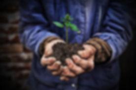Plant hands.jpg